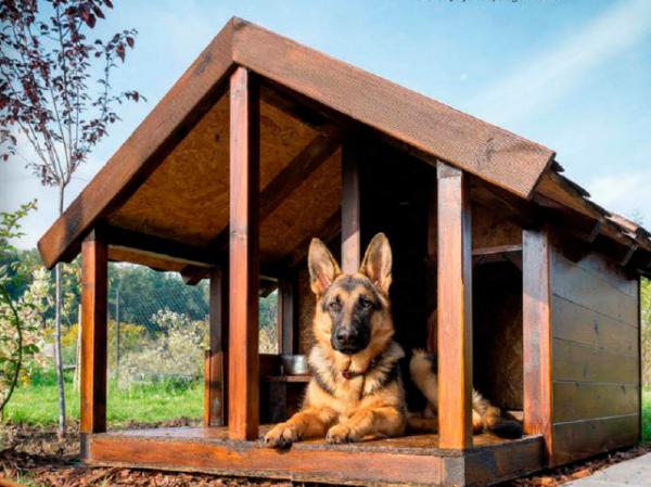 Советы по выбору будки для собаки