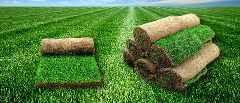 1466074916_banner_grass_web