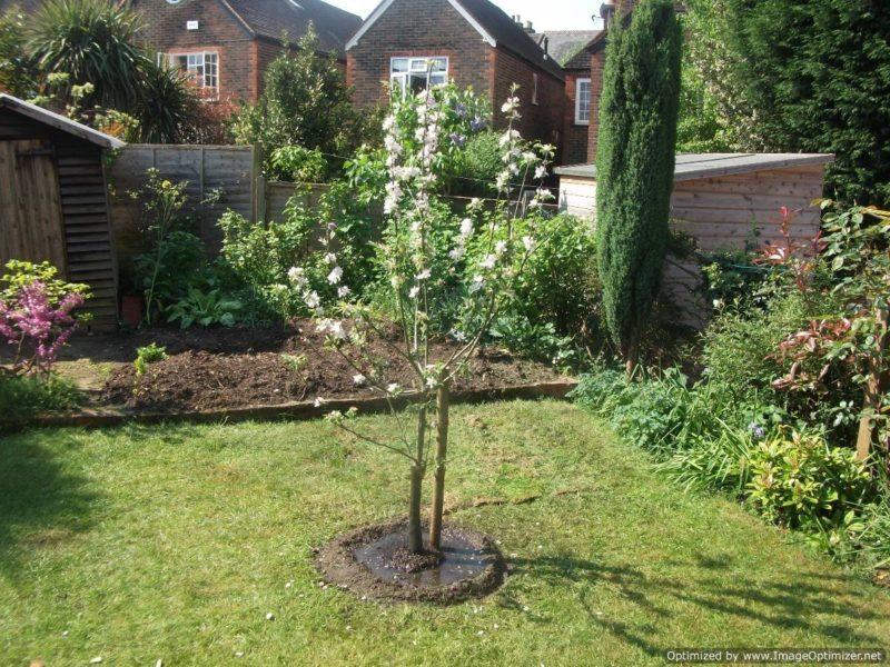 Подготовка к дачному сезону. Выбор места для посадки плодовых деревьев