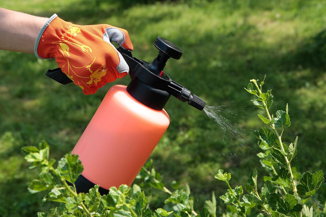 Препараты для растений: как вредителя отправить в нокдаун
