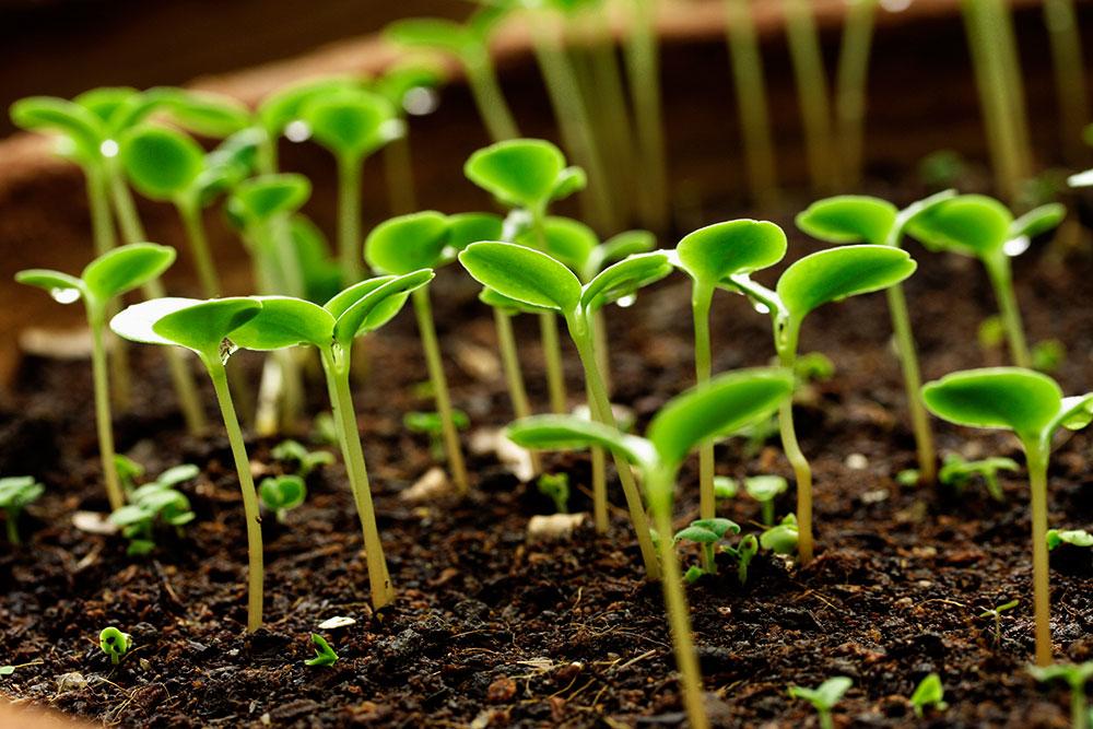 Рассада не успеет напугаться: простой и проверенный способ вырастить хорошую рассаду