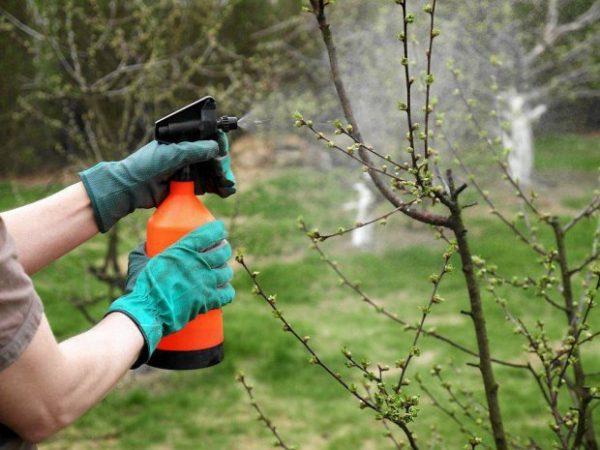 Когда можно обрабатывать деревья и кустарники, чтобы это не навредило пчелам