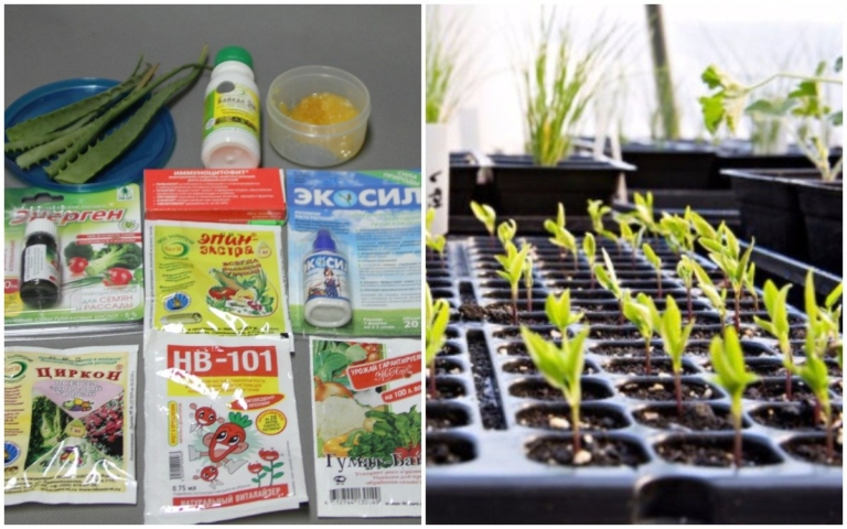 Фитогормоны для прорастания семян: когда следует применять стимуляторы?