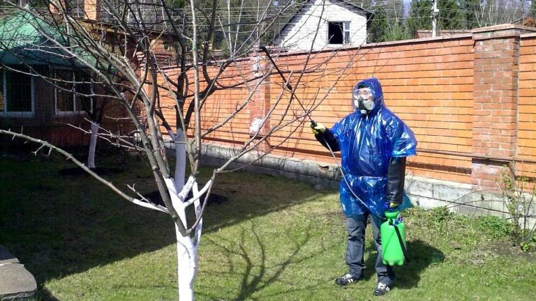 Чем обработать сад весной?