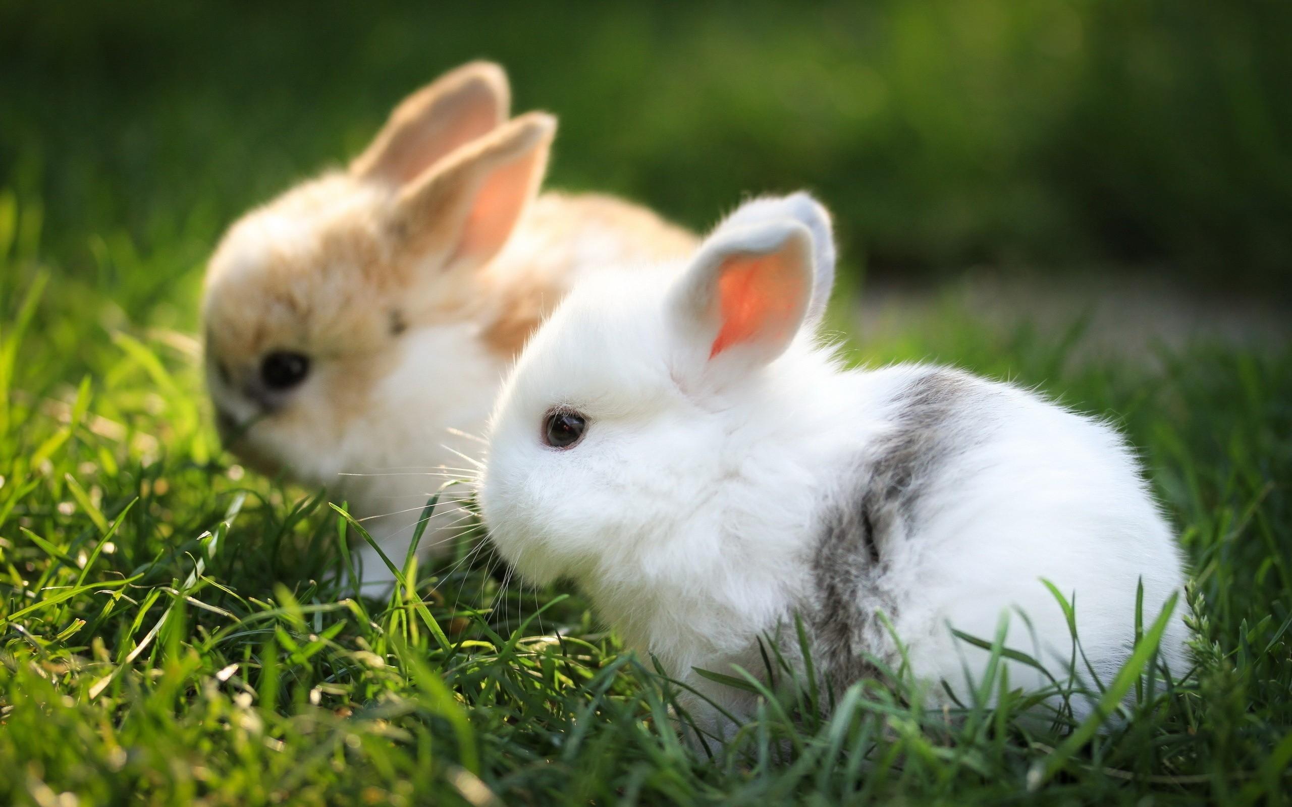 Если решили завести кроликов