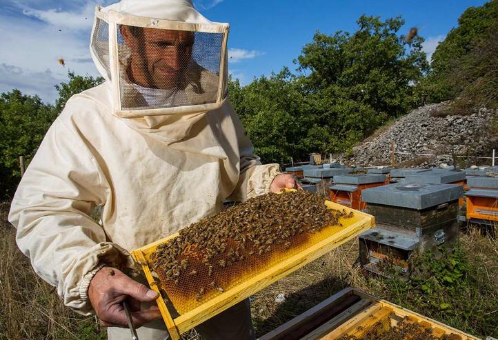 Дрожжи для подкормки пчел