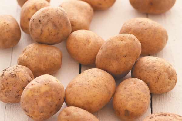 Картофель: почему вянут клубни