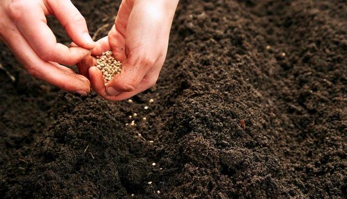 Глубина заделки семян зависит от их размера