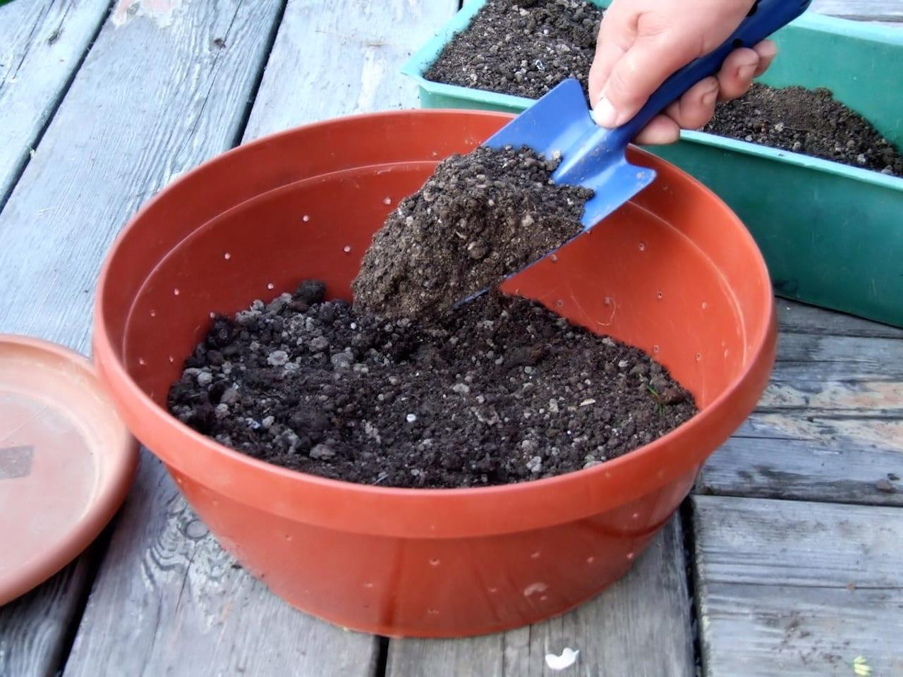 Готовим почвогрунт для рассады