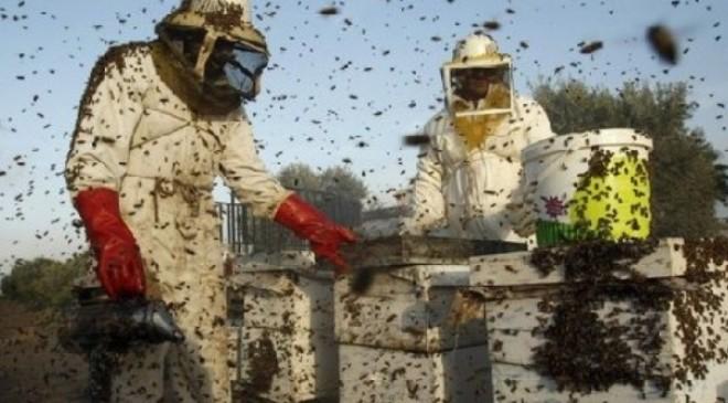Как не допустить роения пчел