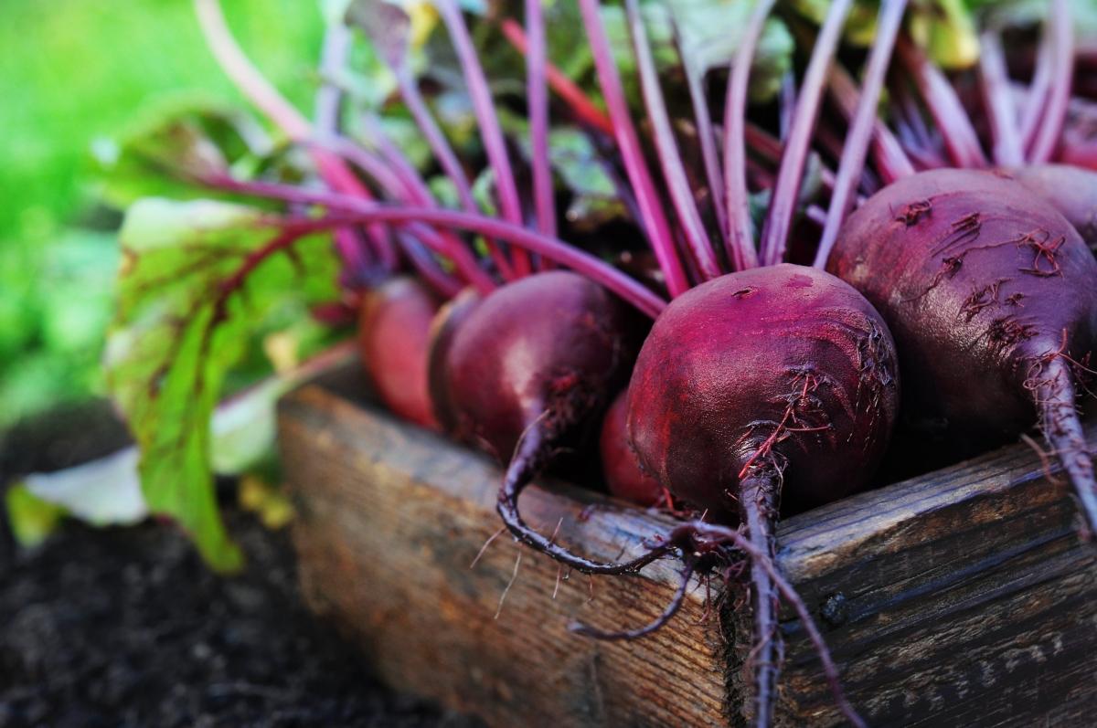 10 советов как получить хороший урожай свеклы
