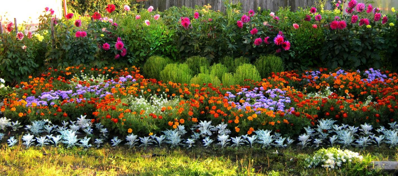 Придаем объем цветнику