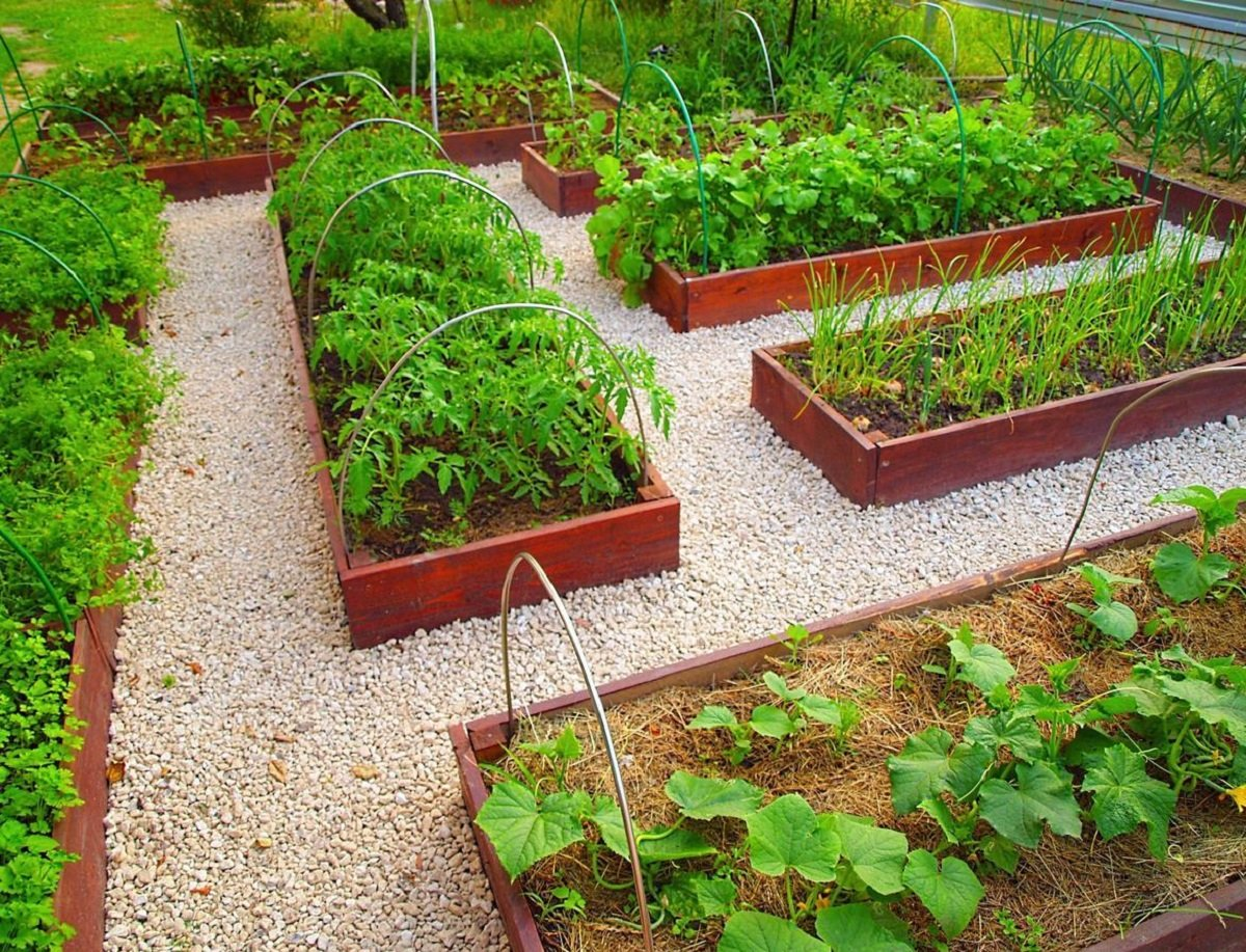 Что сажать на огороде?