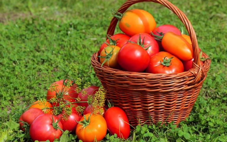 Влияние удобрений на вкус плодов