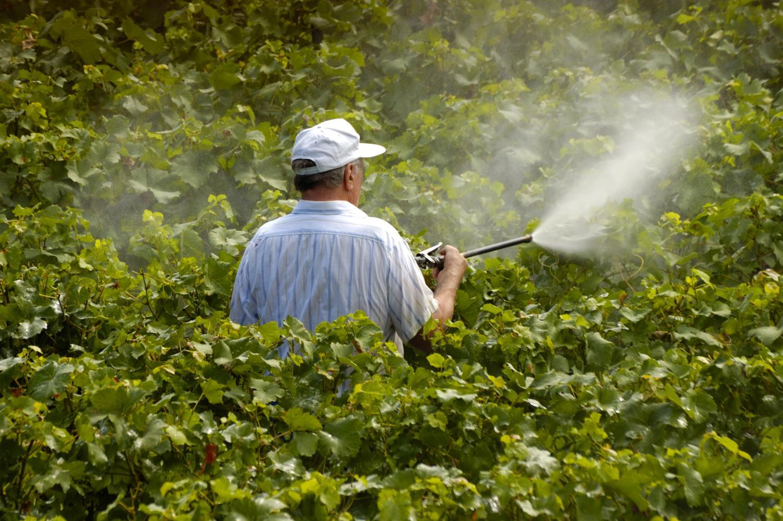 О просроченных пестицидах