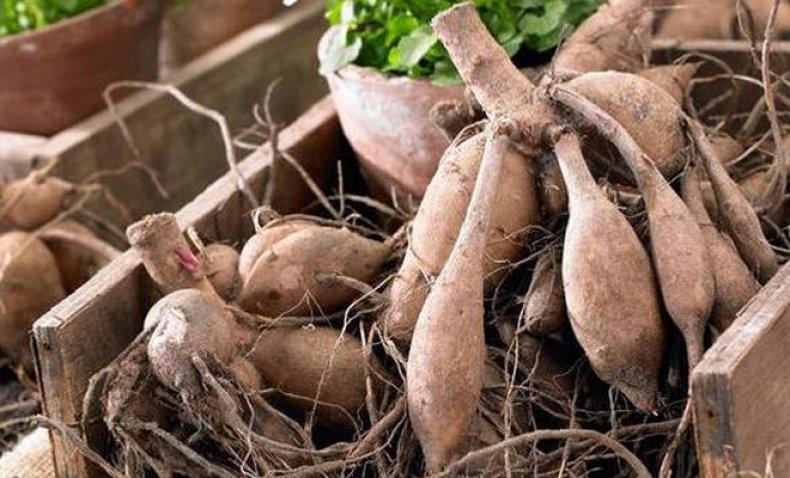 Как правильно хранить луковицы гладиолусов и корнеклубни георгинов