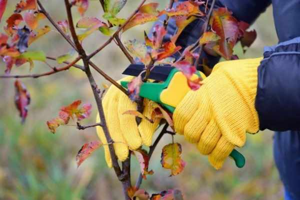 Уход за плодовыми деревьями: главное не навредить