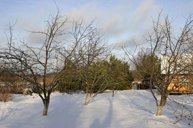 Поливайте деревья зимой!