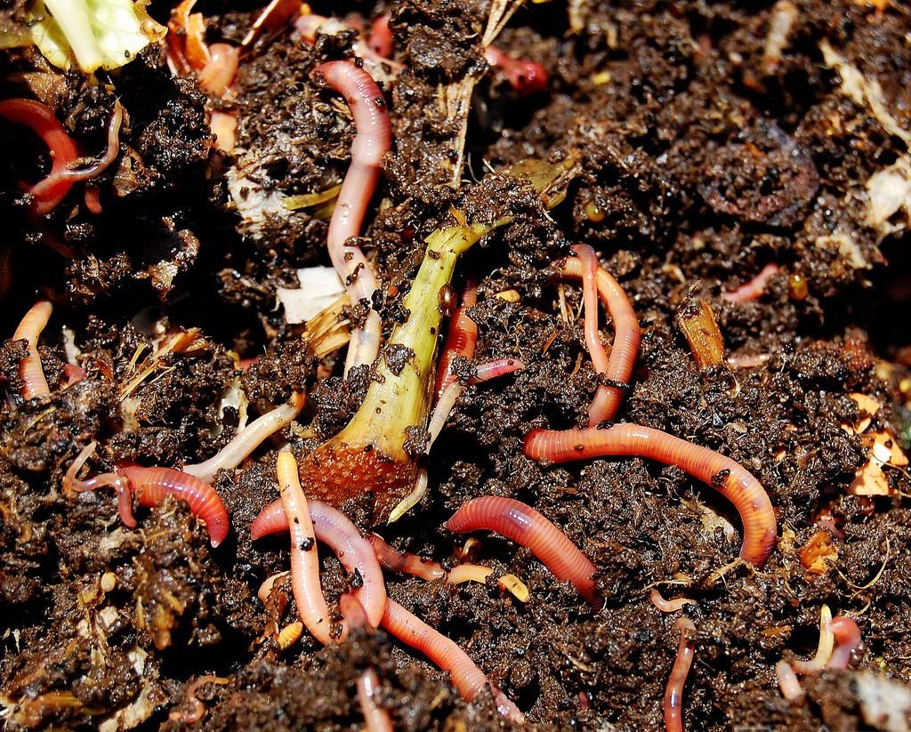 Поговорим о плодородии почвы