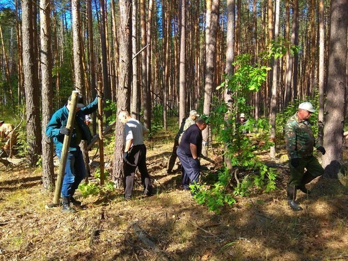 Садоводов могут заставить чистить лес?