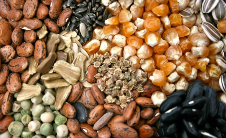 Храните семена правильно