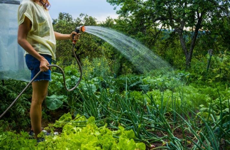 Поливаем овощи правильно: разбираемся в тонкостях