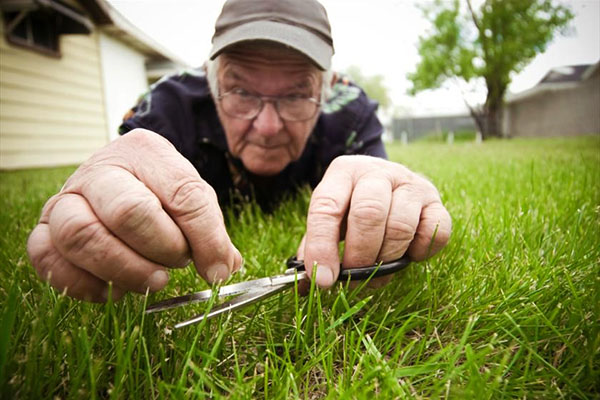 Как ухаживать за газоном