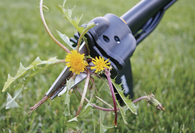 Инструменты для борьбы с сорняками: виды и принцип работы