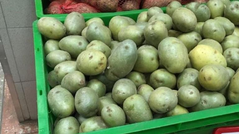 Оздоровить картофель на свету