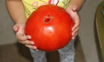 Гигантские сорта томатов