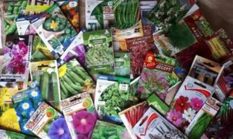 Семена дороже, всходов меньше