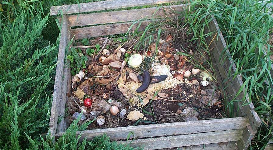 Хлеб, рыба, бананы... Чем садоводы кормят растения