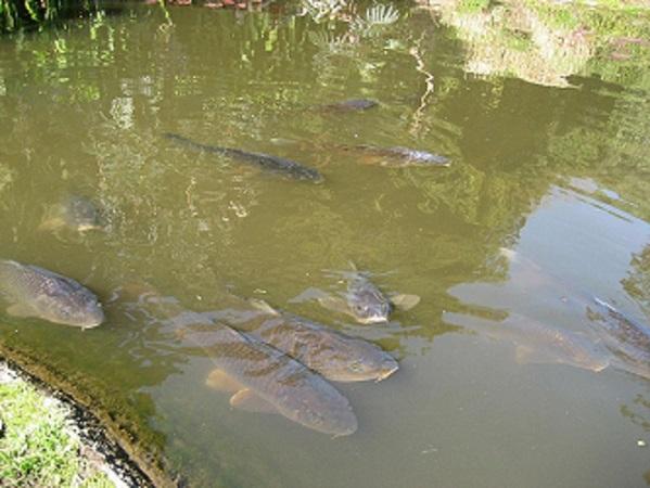 Дачный рыбхоз