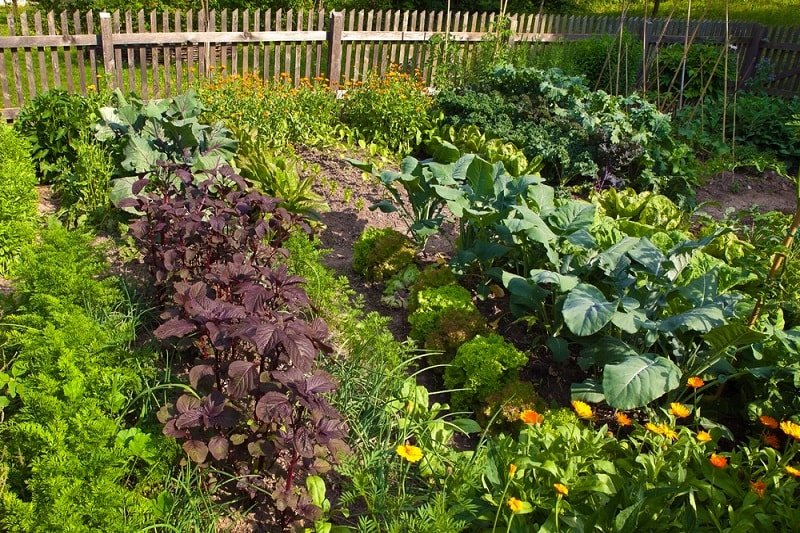 Максимум урожая с клочка земли