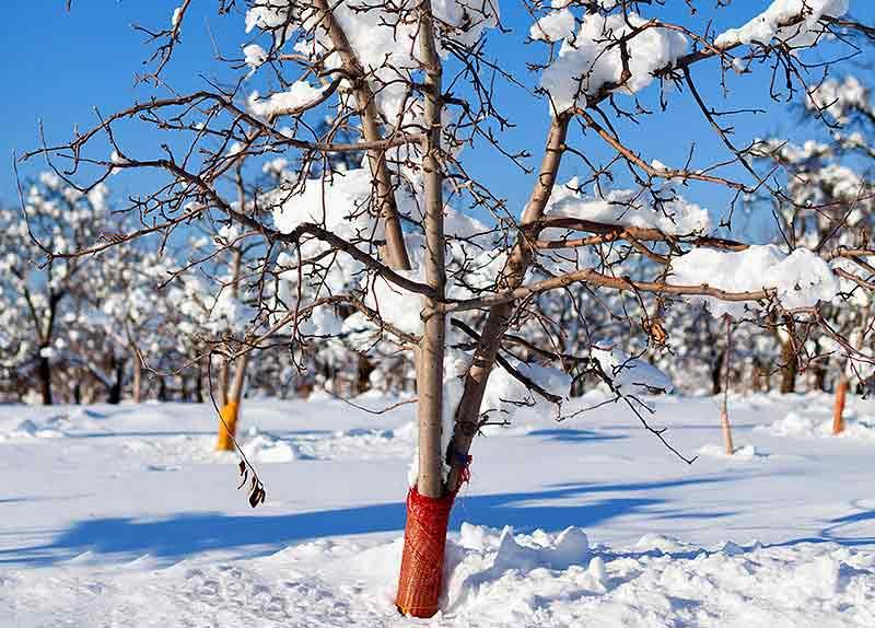 Как помочь деревьям перед зимовкой