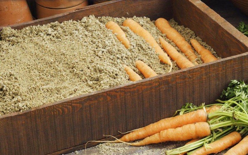 Надежный способ хранения моркови