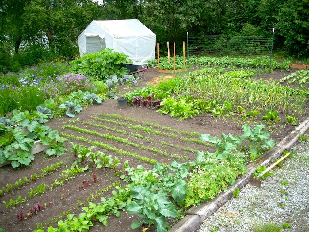 План садово-огородных дел на июнь