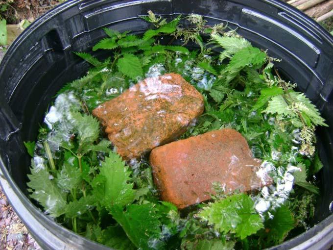 Крапивный «квас» - эффективное удобрение