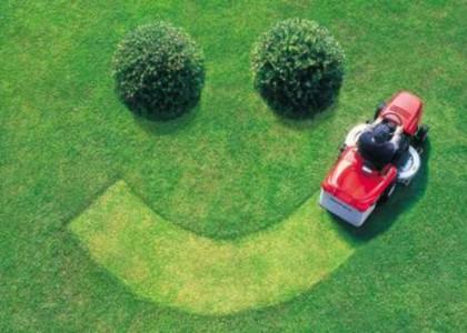 Почему болеют газоны?