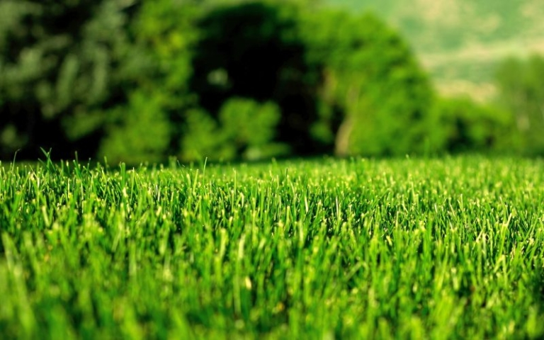 Как самостоятельно создать газон