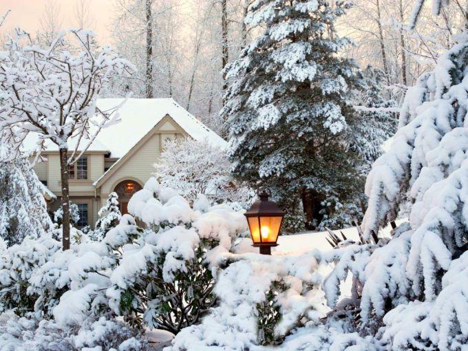 Зимний сад: секреты красоты летом, и зимой