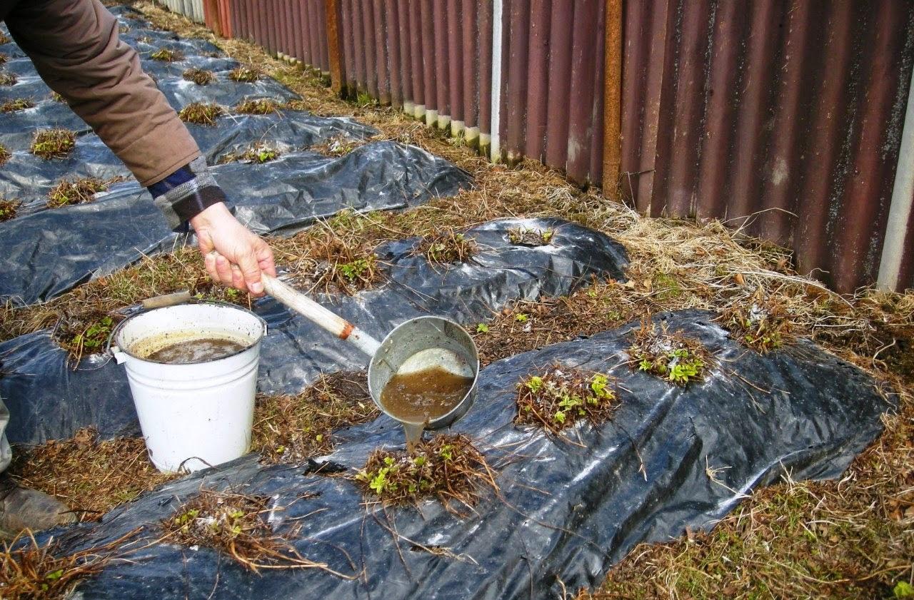Органические грядки с использованием мульчи - огромный урожай даже на бедных почвах