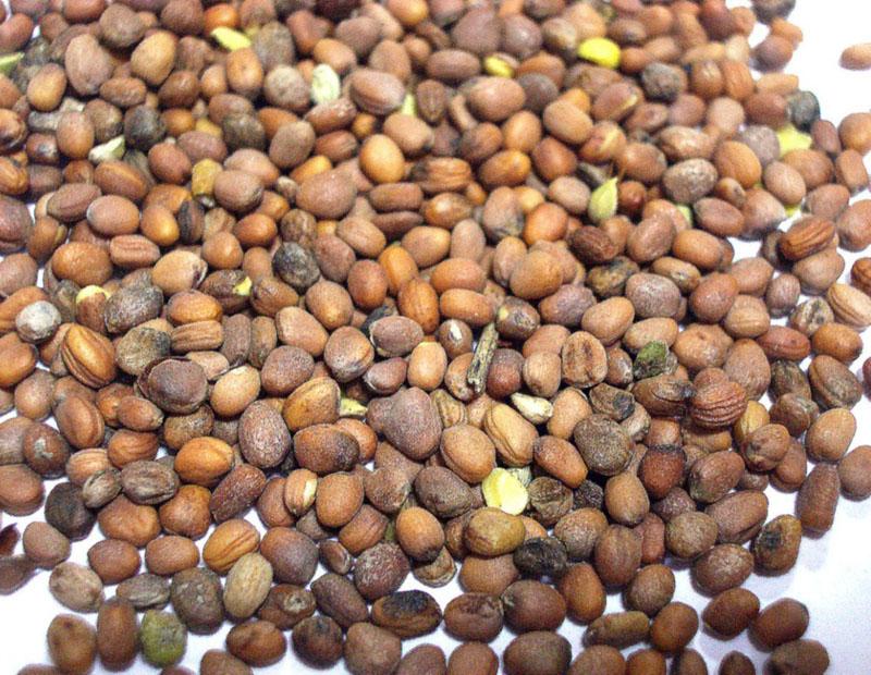 Пять волшебных зерен для здорового урожая картофеля