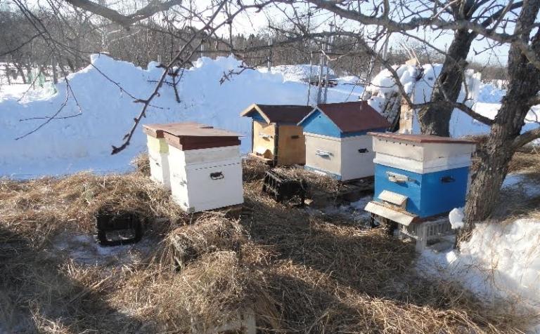 Начало активного периода пчел