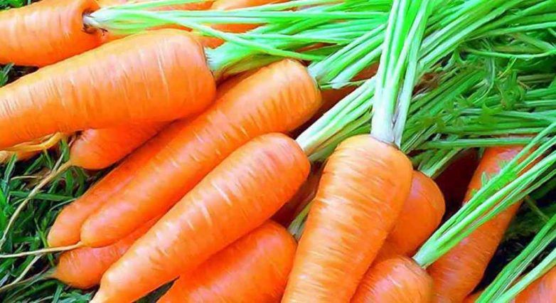 Морковь: секреты хорошего урожая