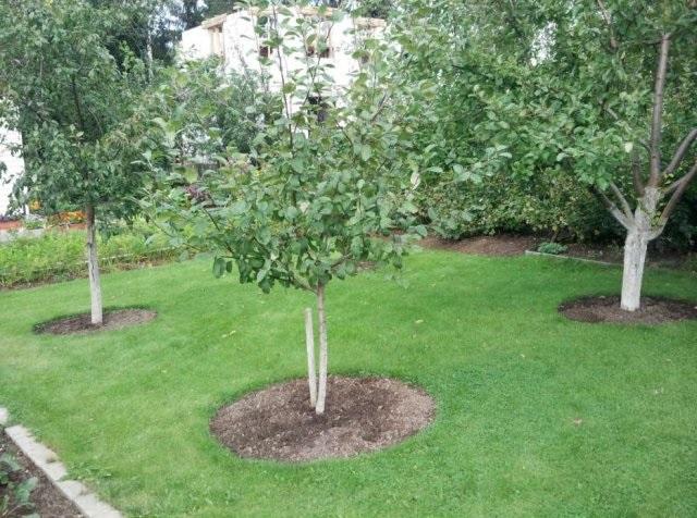 Сад: планируем посадки