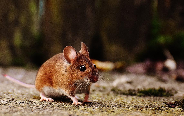 Боремся с мышами