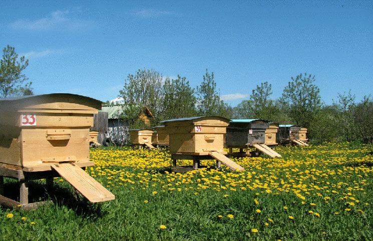 Весна - время бурного роста семей пчел