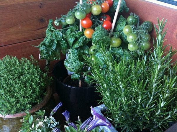 Огород на балконе: получаем урожай не выходя из дома