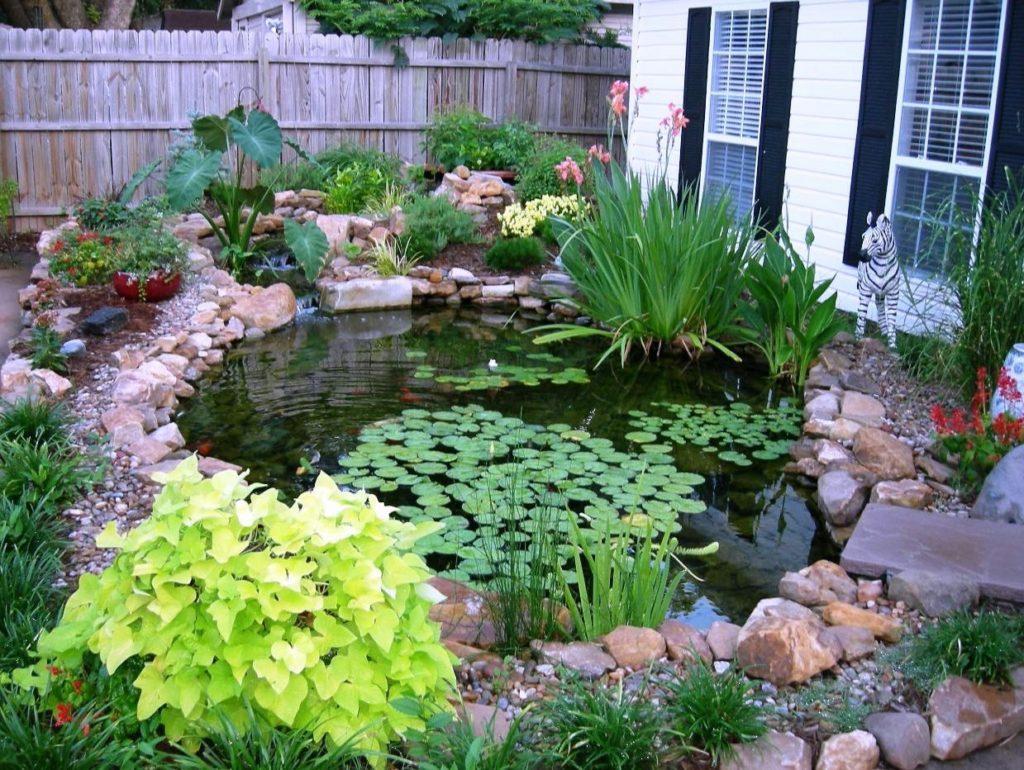 Подбираем растения для пруда